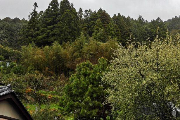 Tosayama2